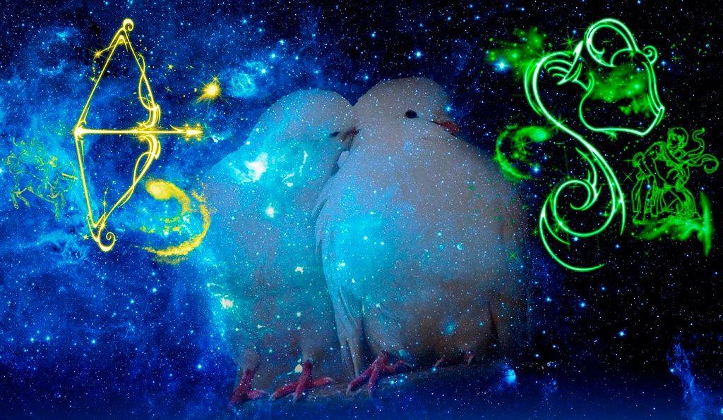 Фото: Голуби созвездия