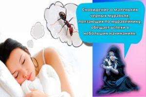 К чему могут сниться муравьи, толкование популярных сонников и трактовка