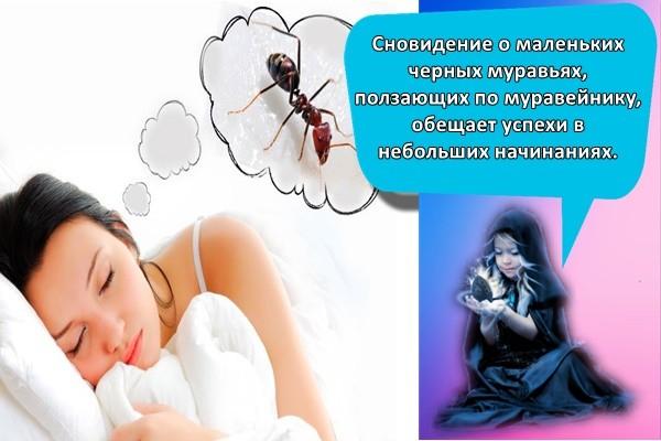 сон и муравьи