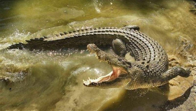нападение крокодила