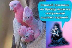 К чему может сниться попугай и как истолковать значение грезы по разным сонникам