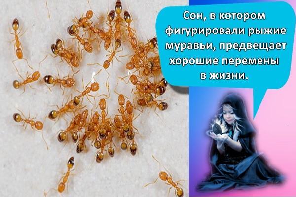 Сон, в котором фигурировали рыжие муравьи, предвещает хорошие перемены в жизни.