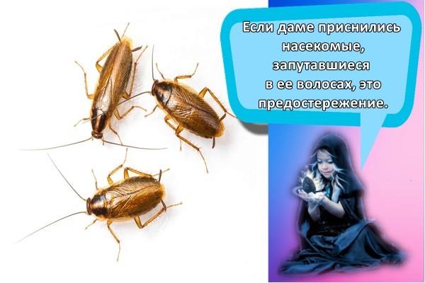 три таракана