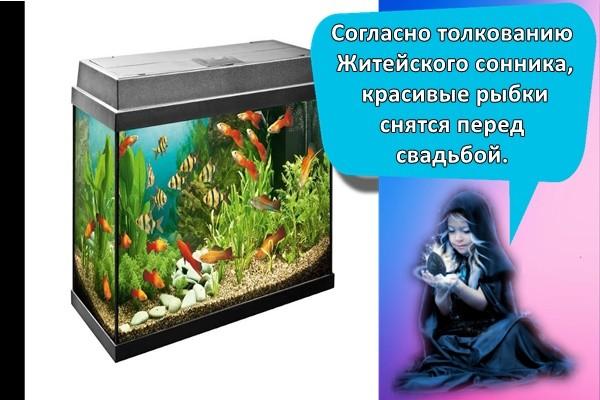Согласно толкованию Житейского сонника, красивые рыбки снятся перед свадьбой.
