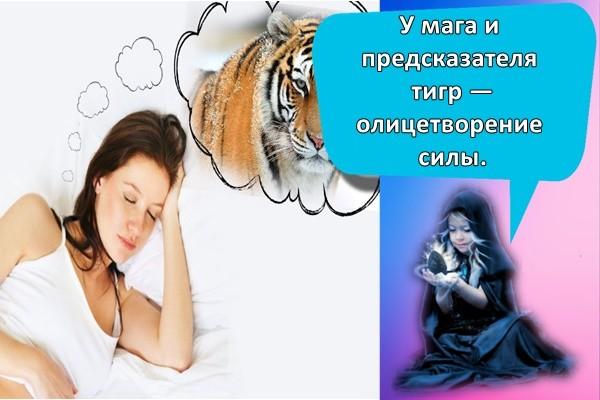 сниться тигр