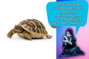 К чему может сниться черепаха, толкование по сонникам и трактовка по действиям