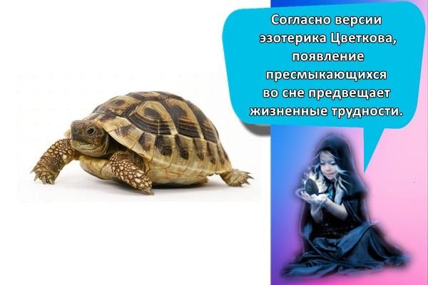 большая черепаха