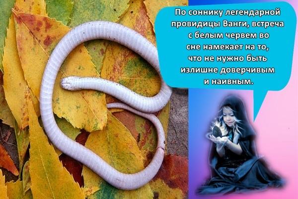 По соннику легендарной провидицы Ванги, встреча с белым червем во сне намекает на то, что не нужно быть излишне доверчивым и наивным