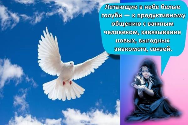 голубь в небе