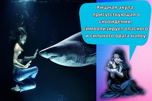 Хищная акула, присутствующая в сновидении, символизирует опасного и сильного врага наяву.