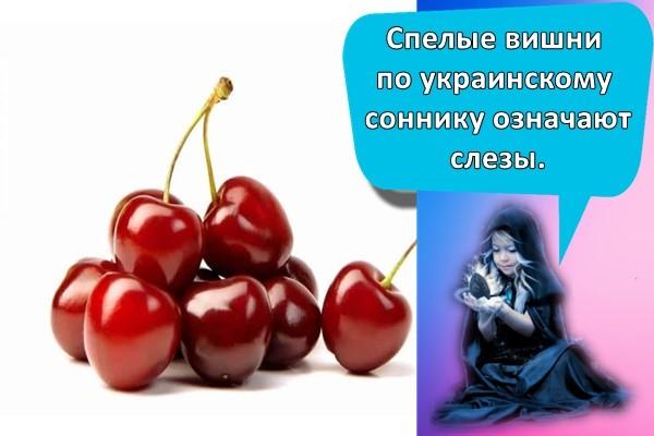 Спелые вишни по украинскому соннику означают слезы.