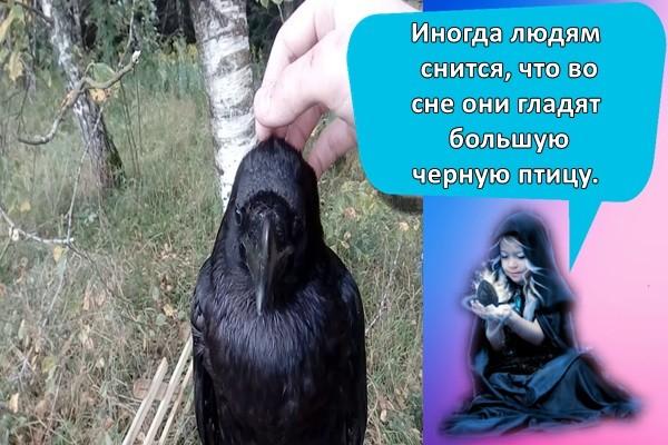 Иногда людям снится, что во сне они гладят большую черную птицу.