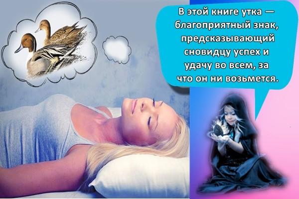 В этой книге утка — благоприятный знак, предсказывающий сновидцу успех и удачу во всем, за что он ни возьмется.