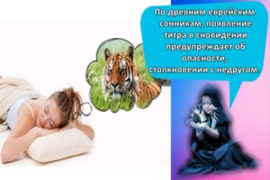 К чему может сниться тигр, толкование по сонникам и трактовка деталей