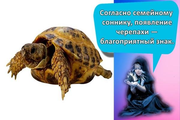 Согласно семейному соннику, появление черепахи — благоприятный знак.