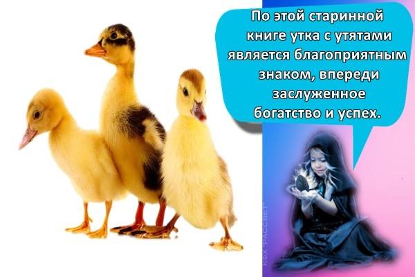 По этой старинной книге утка с утятами является благоприятным знаком, впереди заслуженное богатство и успех.