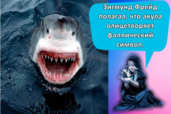 большая акула