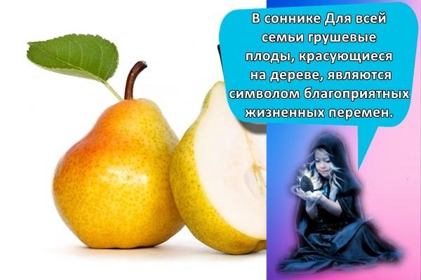 В соннике Для всей семьи грушевые плоды, красующиеся на дереве, являются символом благоприятных жизненных перемен