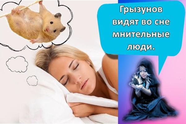сон про хомяка