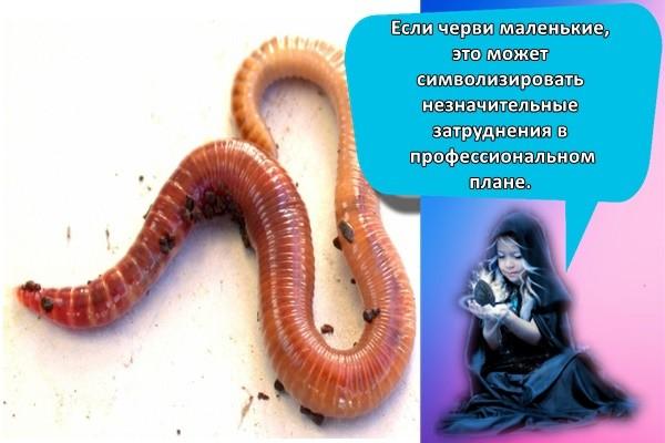 большой червь