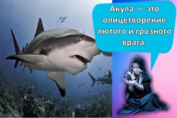 Акула — это олицетворение лютого и грозного врага