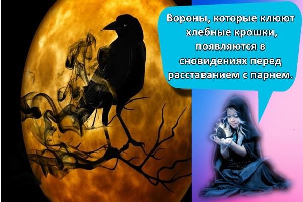 Вороны, которые клюют хлебные крошки, появляются в сновидениях перед расставанием с парнем.