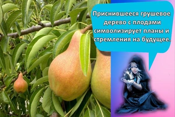 Приснившееся грушевое дерево с плодами символизирует планы и стремления на будущее.