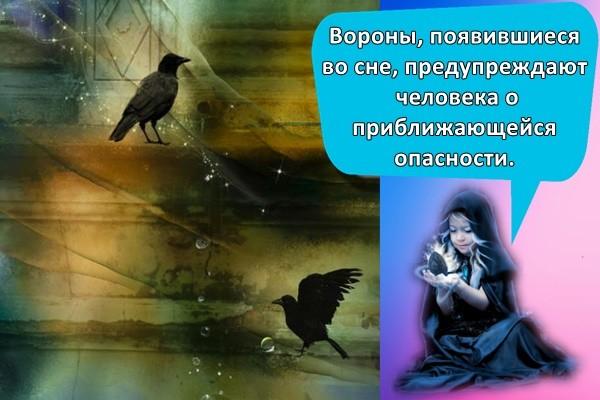 Вороны, появившиеся во сне, предупреждают человека о приближающейся опасности.