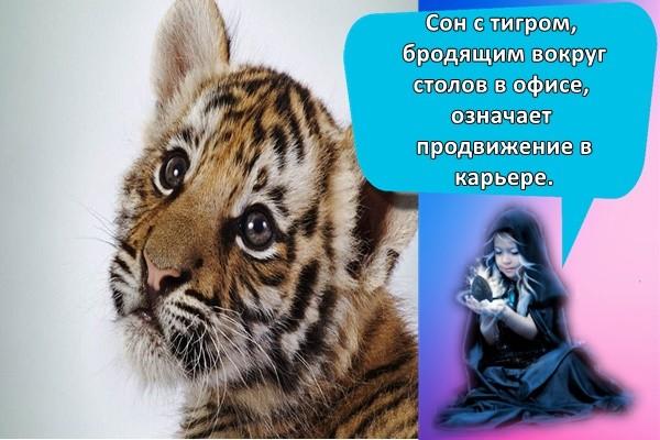 маленький тигр