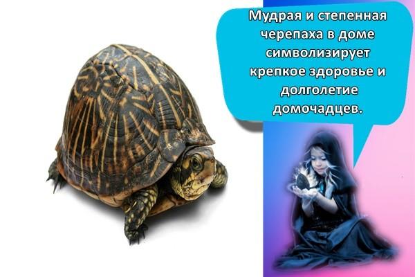 Мудрая и степенная черепаха в доме символизирует крепкое здоровье и долголетие домочадцев.