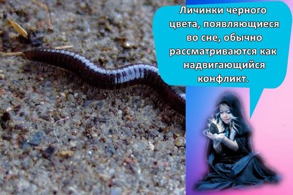 черный червь