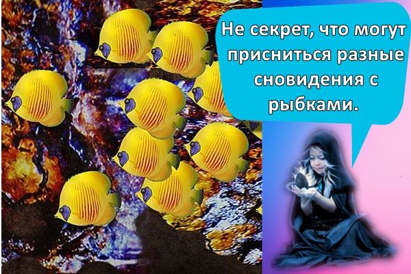 Не секрет, что могут присниться разные сновидения с рыбками.