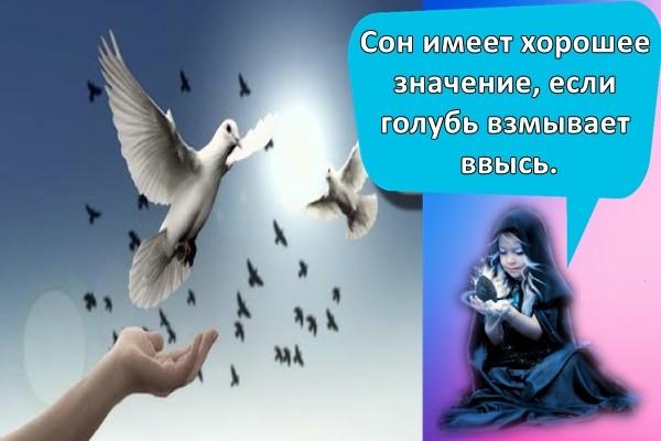 Сон имеет хорошее значение, если голубь взмывает ввысь.