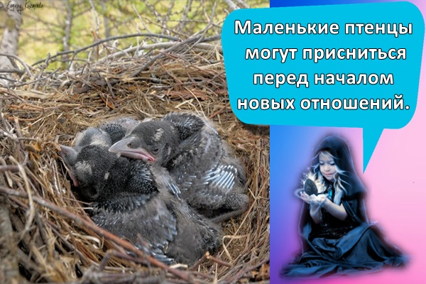 маленькие вороны