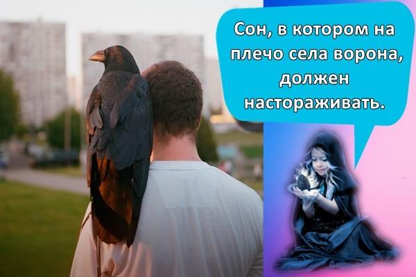 Сон, в котором на плечо села ворона, должен настораживать.