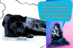 К чему может сниться черная пантера, толкования сонников и трактовка подробностей
