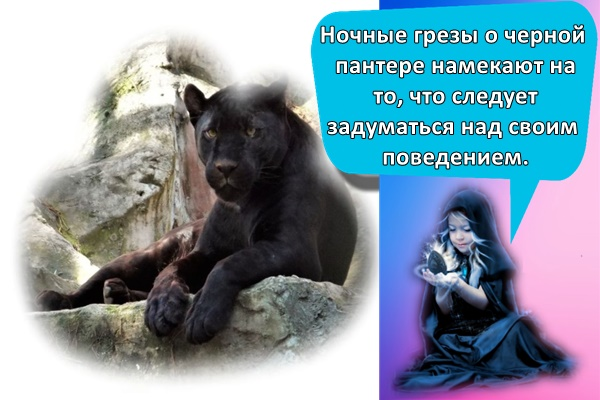пантера а камне