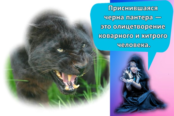 приснившаяся черна пантера — это олицетворение коварного и хитрого человека