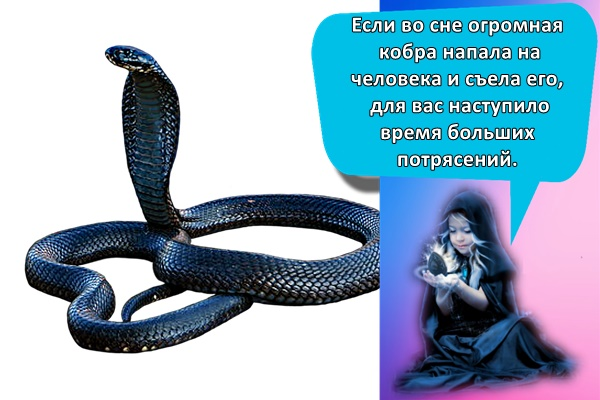 Если во сне огромная кобра напала на человека и съела его, для вас наступило время больших потрясений.