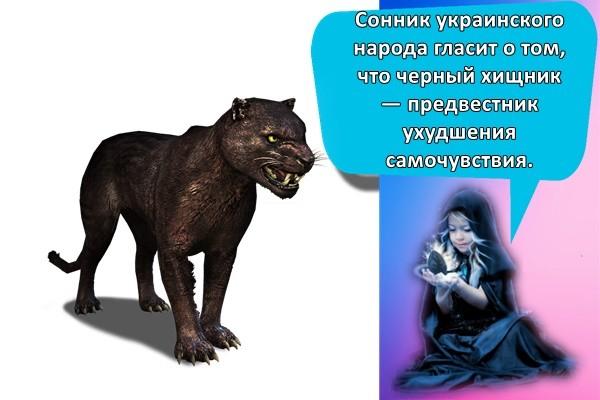 Сонник украинского народа гласит о том, что черный хищник — предвестник ухудшения самочувствия