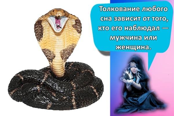большая кобра