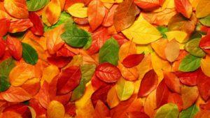 Онлайн гадание Берендеев на листьях деревьев на ближайшее будущее