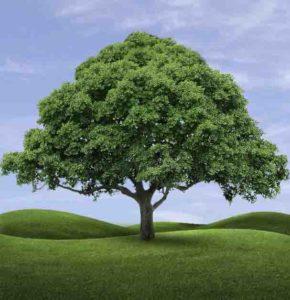Гадание дерево желаний онлайн и бесплатно