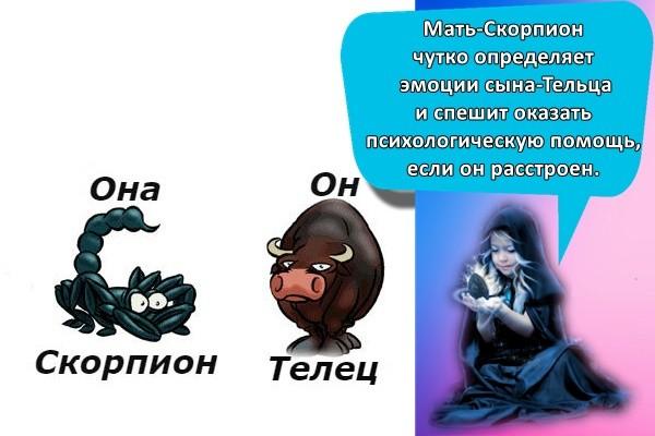 Мать-Скорпион чутко определяет эмоции сына-Тельца и спешит оказать психологическую помощь, если он расстроен.