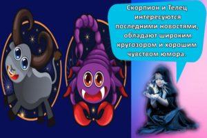 Совместимость и проблемы в отношениях женщины-Скорпиона и мужчины-Тельца